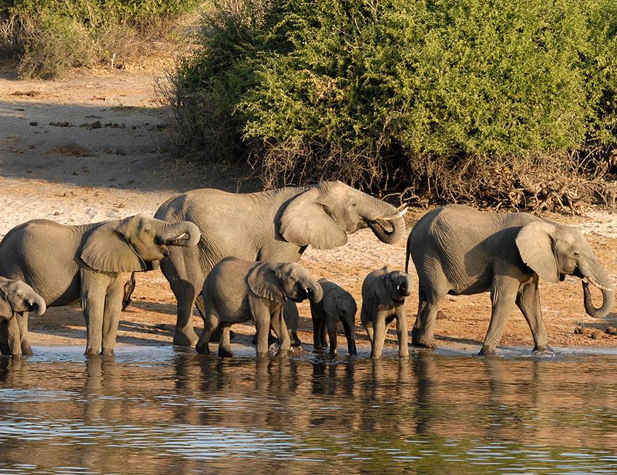 Nine Night Okavango & Chobe Exploration