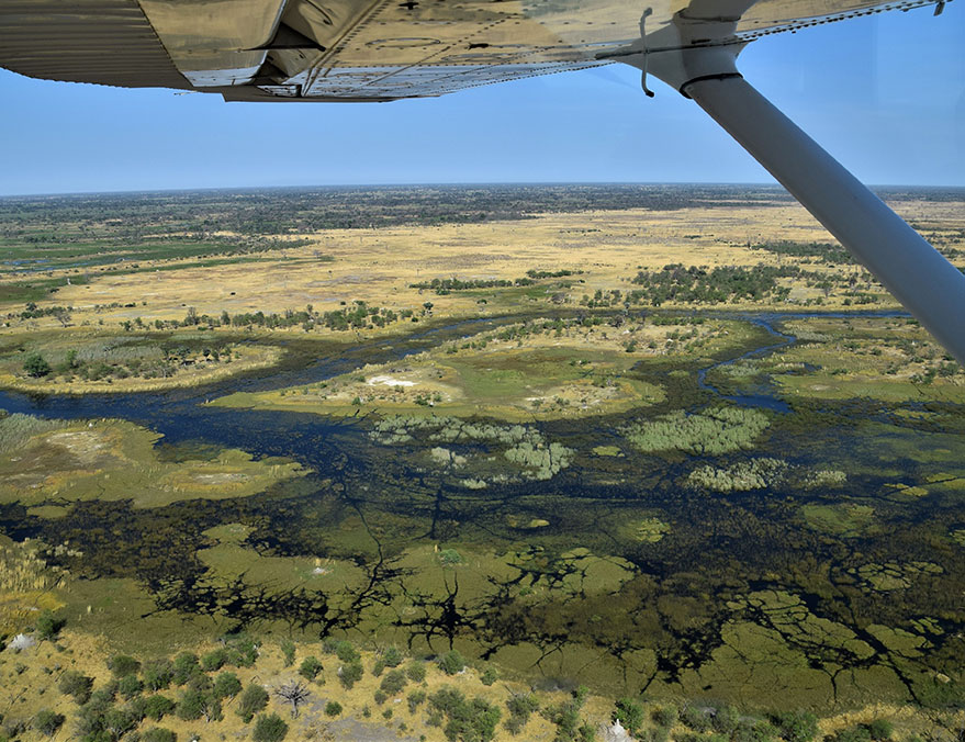 Six Night Okavango Exploration